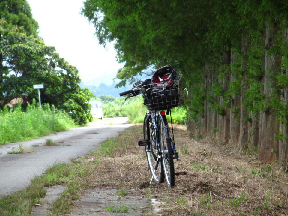 並木の横の道で休憩